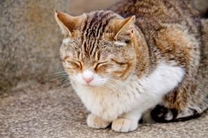 うたた寝をする猫
