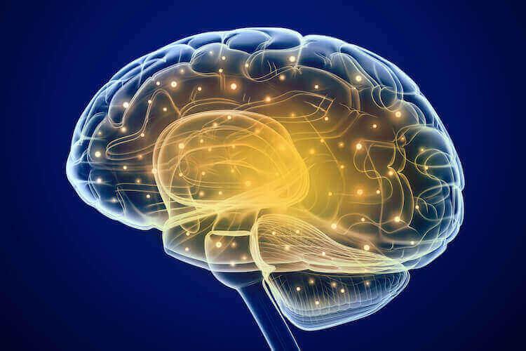 脳機能の向上