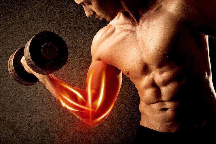 筋肉の発達